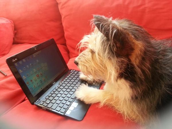 Hund am PC